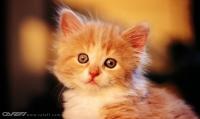 Sự tích tiếng kêu của Mèo